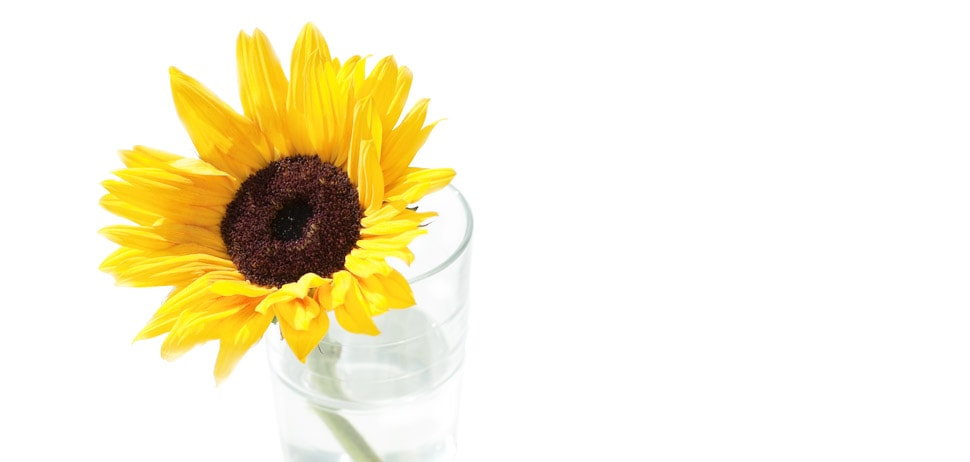 flower_in_glass_OLB_desktop_970x462-2