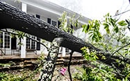 Fallen tree in front of a house